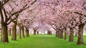 Road-Spring-Season
